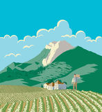 Farmer And His Field. A vector illustration of a farmer looking over his field. This illustration is layered to make editing easier Stock Photo