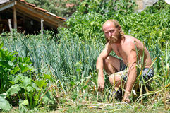 A farmer in his garden Stock Images