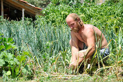 A farmer in his garden Stock Photography
