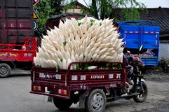 Pengzhou, China: Truckload of White Radishes. Farmer with his motorcycle cart fully loaded with white Daikon radishes arrives at a local co-operative market in Royalty Free Stock Photography