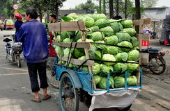 Pengzhou, China: Farmer with Truckload of Cabbages. Farmer with his small bicycle cart filled with cabbages waits for a weigh-in at a local farmer's co-operative Royalty Free Stock Images