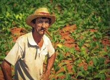 Farmer on his tobacco field. Stock Image