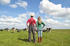 The farmer and his wife in the meadows. The farmer and his wife proudly looking at their cows in the countryside from the Netherlands Royalty Free Stock Photos