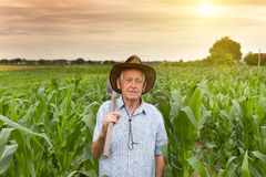 Farmer with hoe in corn field Royalty Free Stock Photography