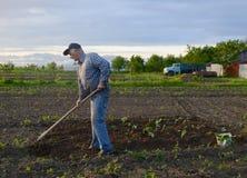 Farmer hoeing vegetable garden Stock Images