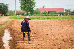 Farmer hoeing vegetable. Woman preparing vegetable bed for planting at the early spring Stock Photography