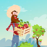Farmer Hold Box With Apple Garden Fruit Harvest Stock Images