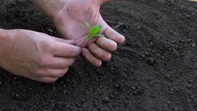 Farmer holding baby plant in hands. Slow motion shoot stock video footage