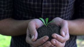 Farmer holding baby plant in hands. Slow motion shoot stock footage
