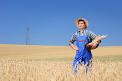 Farmer holding a basket in a wheat field Royalty Free Stock Photo