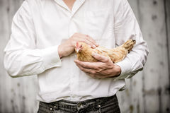 Farmer Holding a Beige Chicken Stock Image