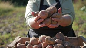 The farmer holding potatoes. Healthy food with vitamins. Fresh and organic food. Concept of vegetarians, organic and. The farmer is holding a biological product stock video footage