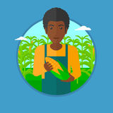 Farmer holding corn vector illustration. An african-american farmer holding a corn cob on the background of corn field. An african-american happy farmer Royalty Free Stock Image
