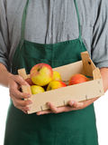 Farmer holding crate with fresh harvested apples Stock Image