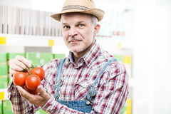 Farmer holding fresh harvested tomatoes stock photos