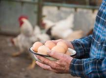 Farmer holding fresh organic eggs. Hens on the background stock image