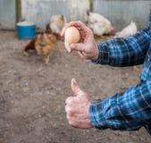 Farmer holding fresh organic eggs. Hens on the background stock photo
