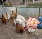 Farmer holding fresh organic eggs. Hens on the background stock images