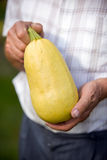 Farmer holding freshly picked  zucchini Royalty Free Stock Images