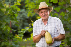 Farmer holding freshly picked  zucchini Stock Image