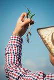 Farmer holding a green young plant Stock Photos