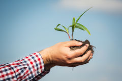 Farmer holding a green young plant Royalty Free Stock Photography