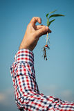 Farmer holding a green young plant Royalty Free Stock Photo