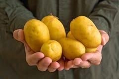 Farmer holding potato Royalty Free Stock Photography