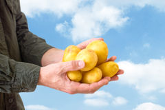 Farmer holding potato Royalty Free Stock Photo