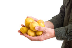 Farmer holding potato Royalty Free Stock Photography