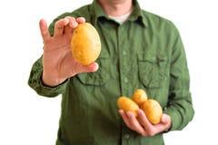 Farmer holding potato Stock Image