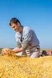 Farmer holding ripe corns Royalty Free Stock Photo