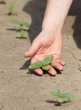 Farmer holding sprout in the field Royalty Free Stock Photos
