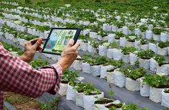 Farmer holding a tablet smart arm robot work agricultural machinery stock photos