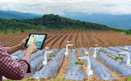 Farmer holding a tablet smart arm robot work strawberry care agricultural machinery stock photo