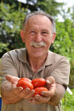 Farmer holding tomatoes Stock Images
