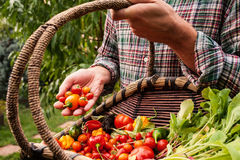 Farmer holding wooden basket and produce in hand Royalty Free Stock Photo