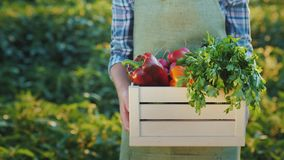 A farmer holds a box of juicy fresh vegetables from his field stock video footage