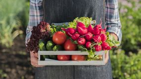 A farmer holds a wooden box with a set of fresh ripe vegetables from his garden