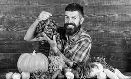 Farmer υπερήφανη του ξύλινου υποβάθρου σταφυλιών λαβής ατόμων συγκομιδών σταφυλιών Οργανική έννοια καλλιέργειας συγκομιδών λαχανι στοκ φωτογραφία με δικαίωμα ελεύθερης χρήσης