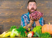 Farmer with homegrown harvest on table. Farmer proud of harvest vegetables and grapes. Man bearded holds grapes wooden. Background. Vegetables organic harvest royalty free stock photo