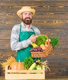 Farmer with homegrown vegetables. Fresh organic vegetables in wicker basket and wooden box. Man cheerful bearded farmer. Near vegetables wooden background royalty free stock images