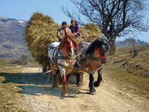 Farmer with horse and carriage hay in Romania royalty free stock photography