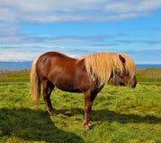 Farmer horse with light mane Stock Photo