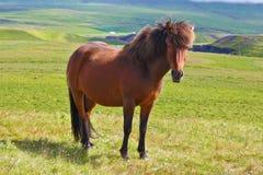 Farmer  horse Royalty Free Stock Image
