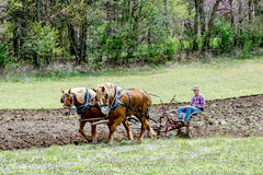 Farmer with horses plowing Royalty Free Stock Photo