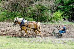 Farmer with horses plowing a field Stock Photo
