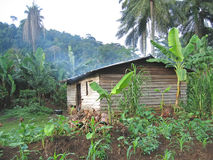 Farmer house. In the tropical jungle - Cameroon - Africa Royalty Free Stock Photography