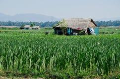 Farmer house Stock Photo