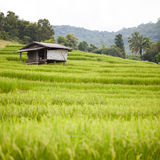 Farmer house in the rice field Stock Images